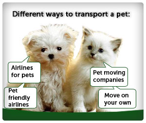 How to Transport a Pet